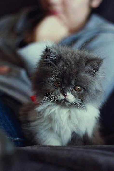 Tiny kitten i found on the internet
