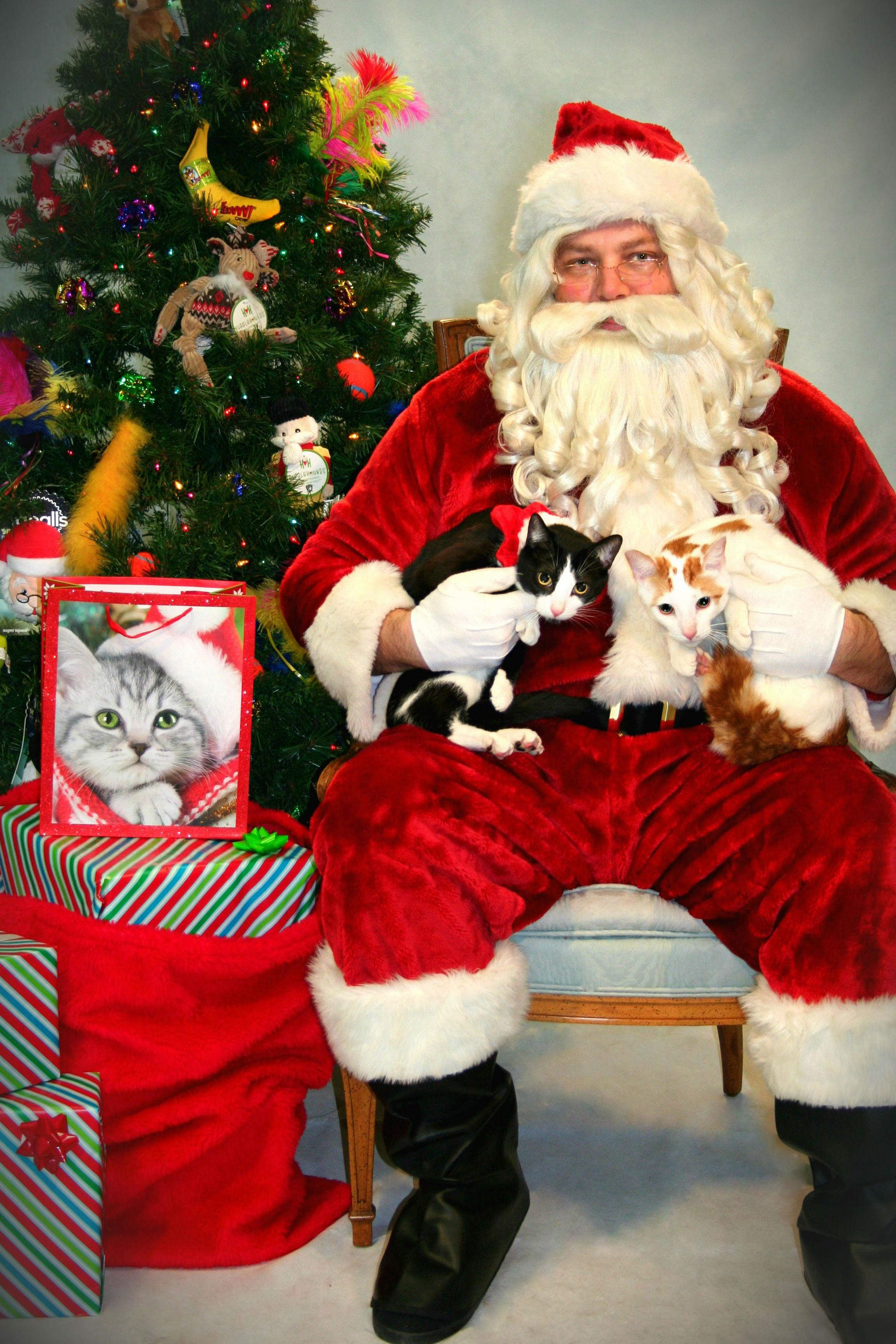 Took my two cats to meet santa. everyone was thrilled.