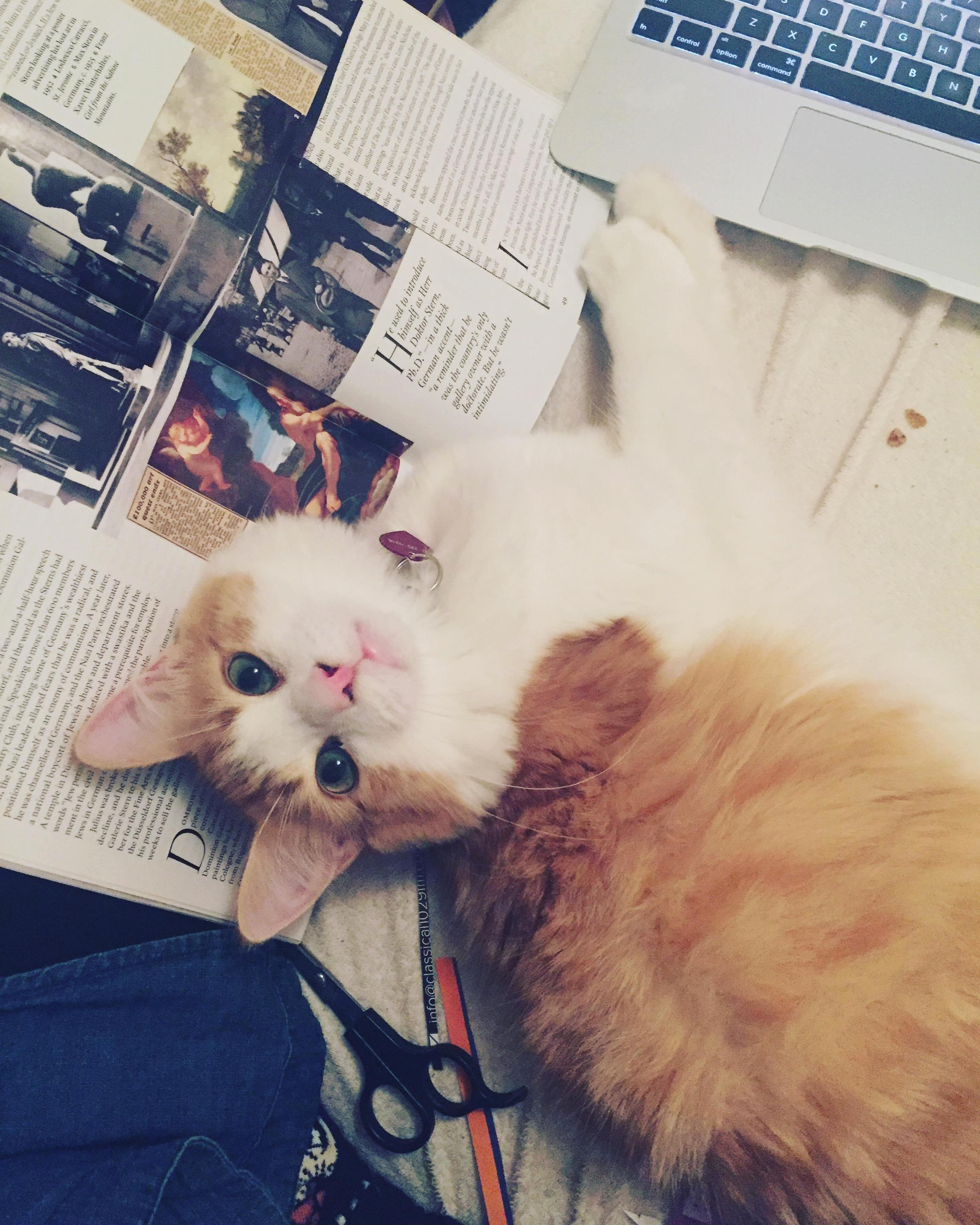 Trying to cut up magazines for a collage. gulliver decided hed rather get attention.