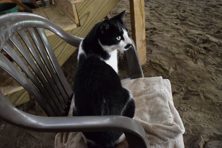 When not hard at work keeping the mice at bay cleo the barn cat enjoys watching the riding lessons.
