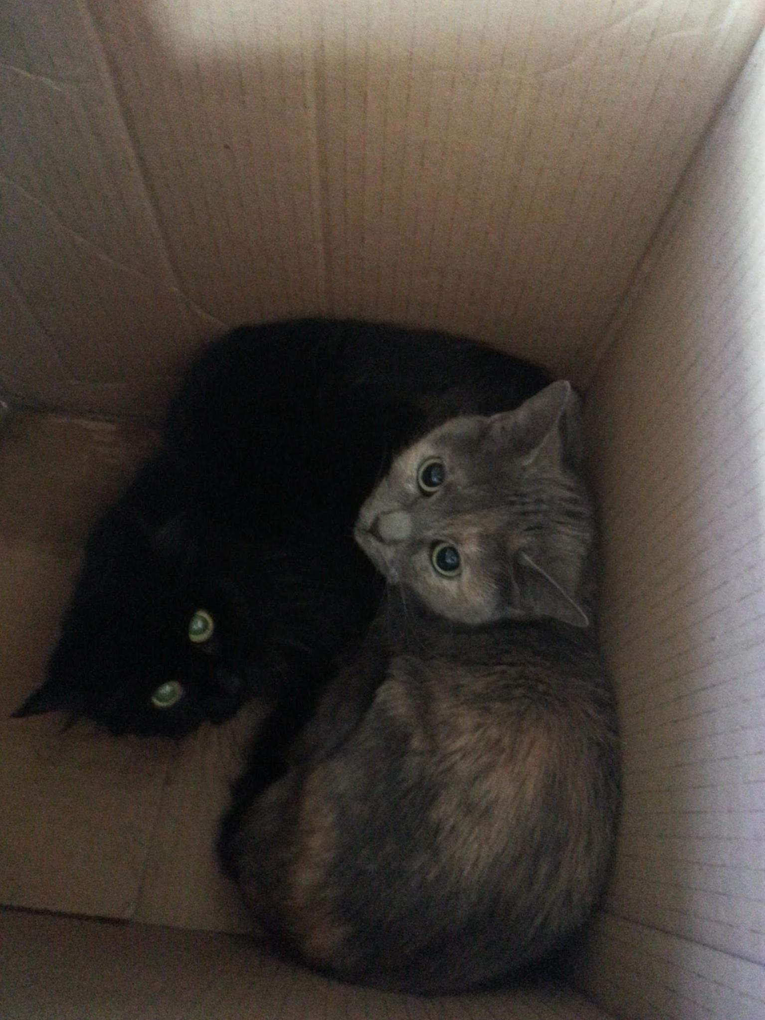 Babies abandoned in a taped up cardboard box this morning. finding homes now. people are terrible sometimes.