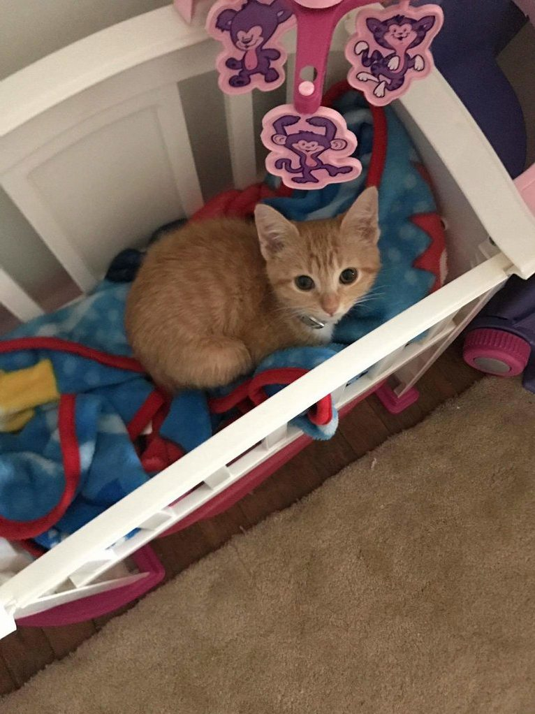 Cats in the cradle… er… crib.