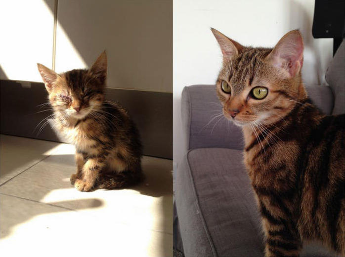 Frosties 2 months vs 1 year old – were quite proud of this rescue