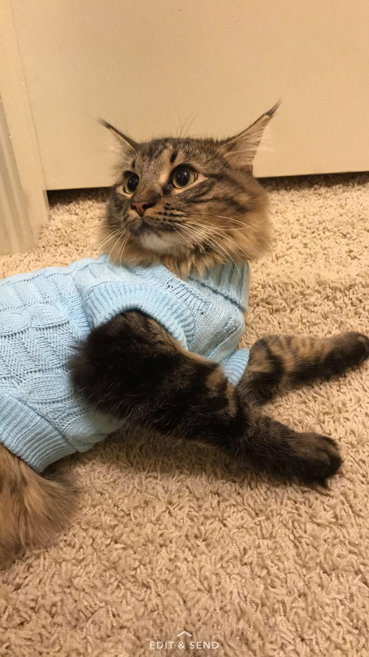 I got my cat a sweater