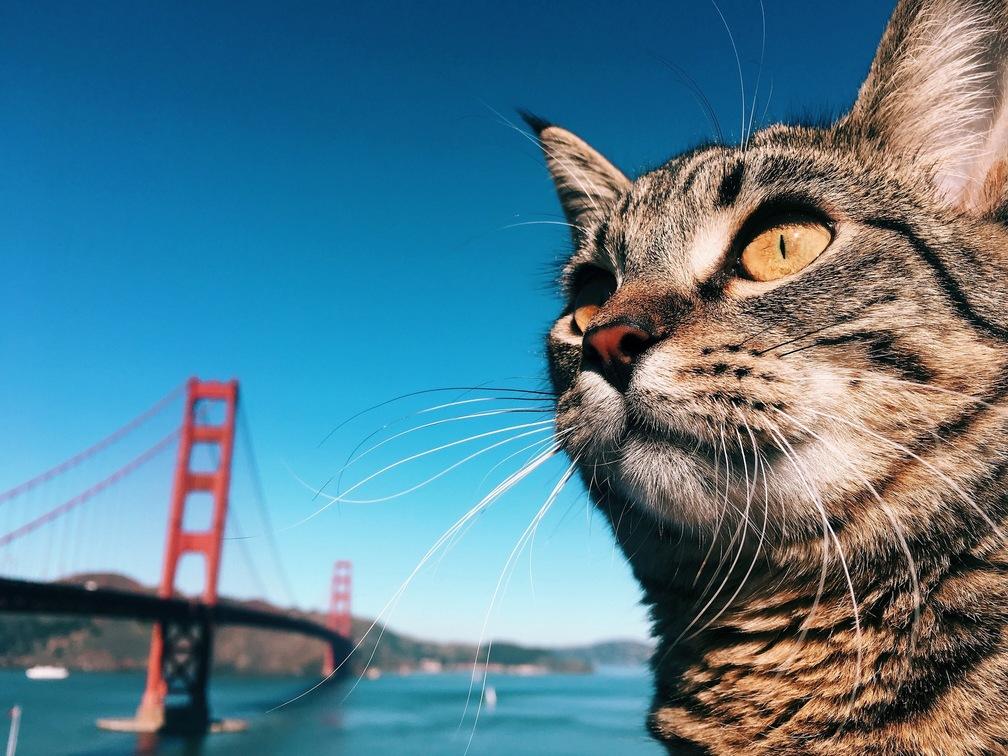 I took my cat to the golden gate bridge