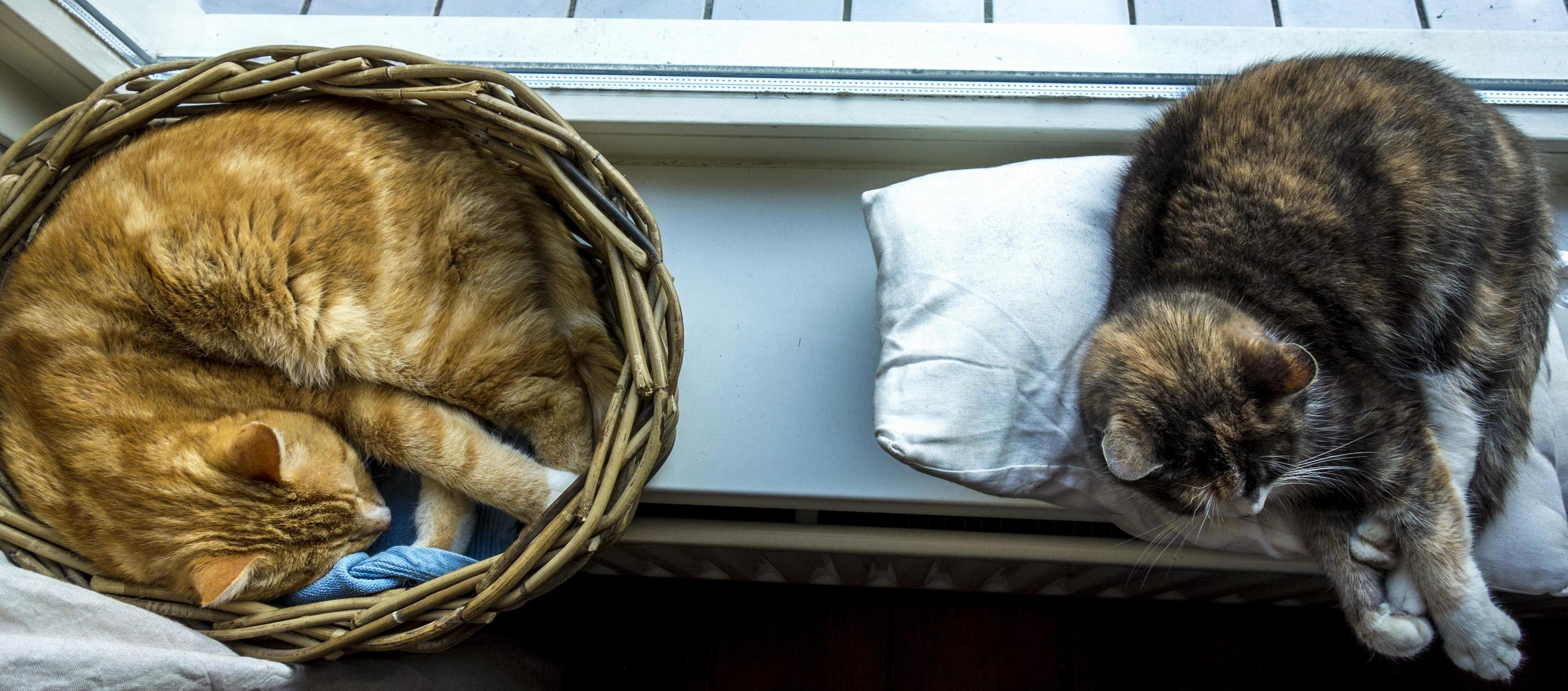 Life is so hard when you are a cat..