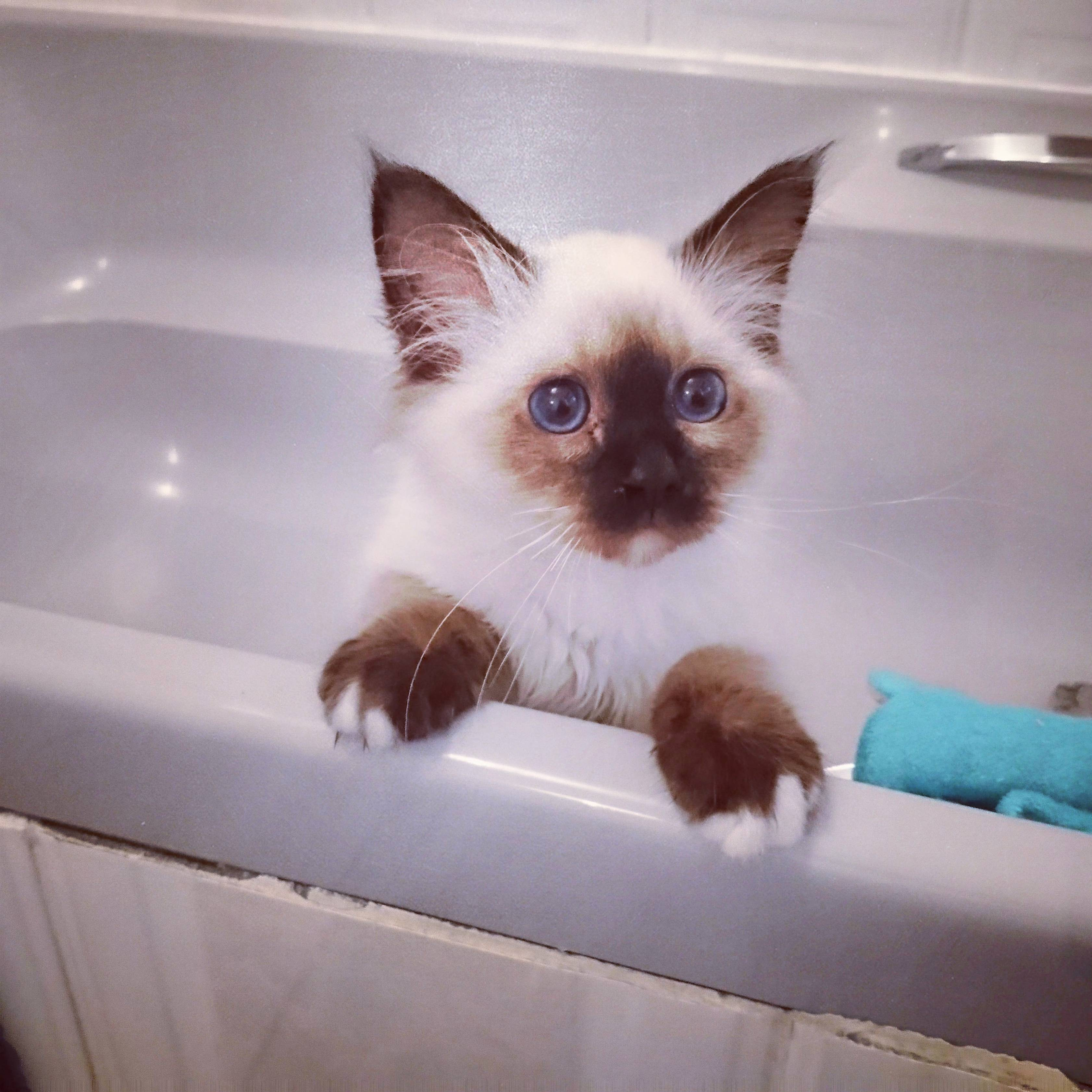 Look who i found playing in the bath