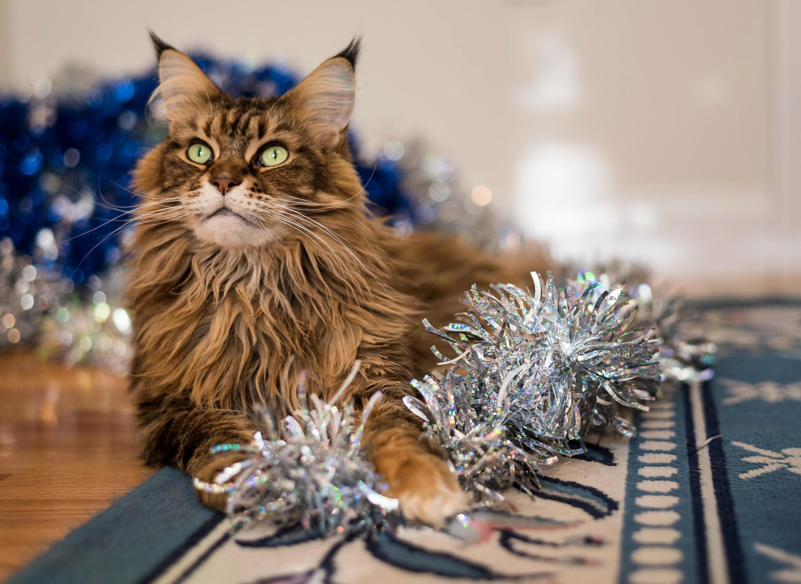 Our tinsel princess has been helping us take decorations down.