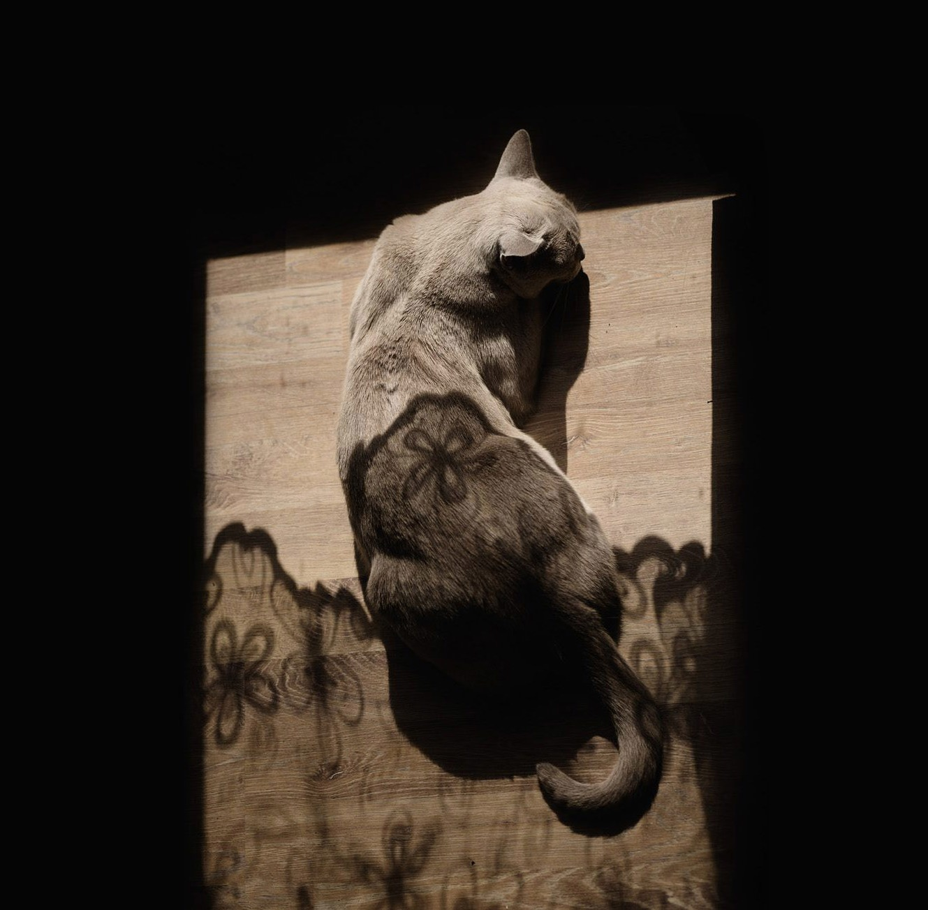 Shadow catnap