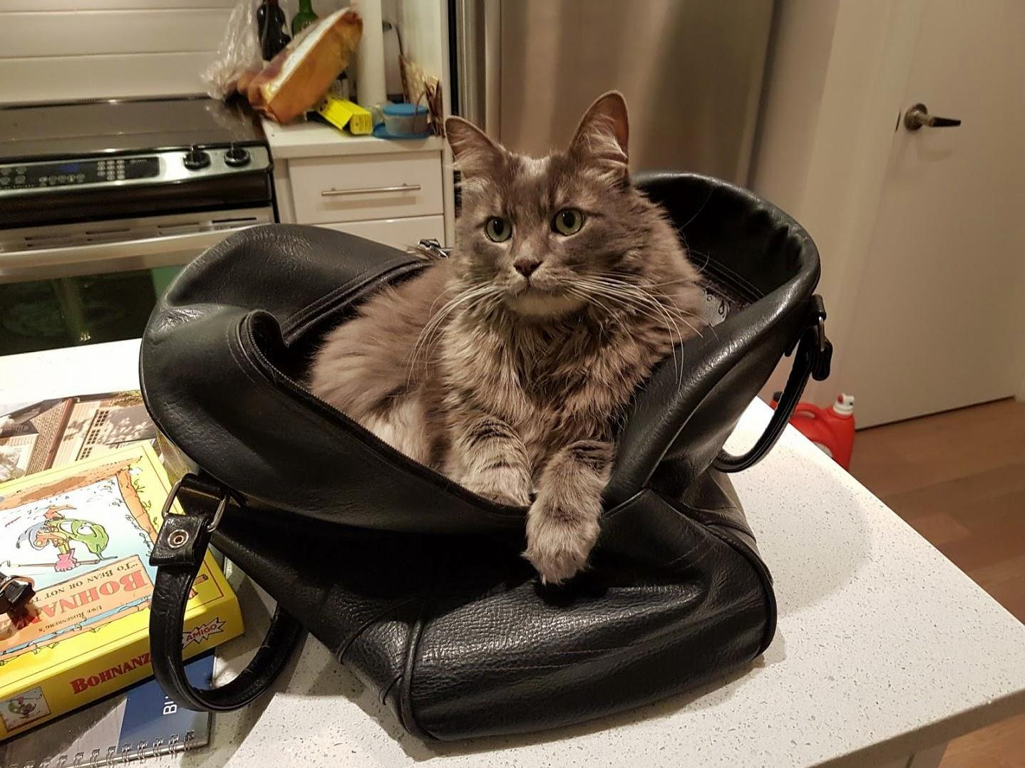 This bag is his favourite place on earth