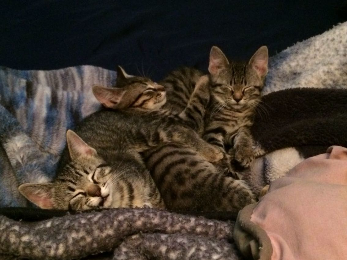 A thermonuclear catpile