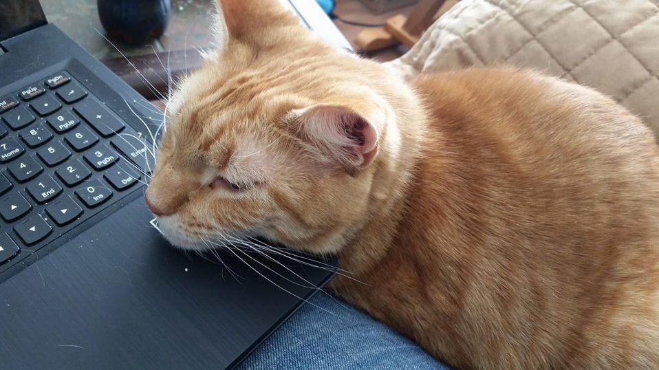 Apollo helping me work this morning