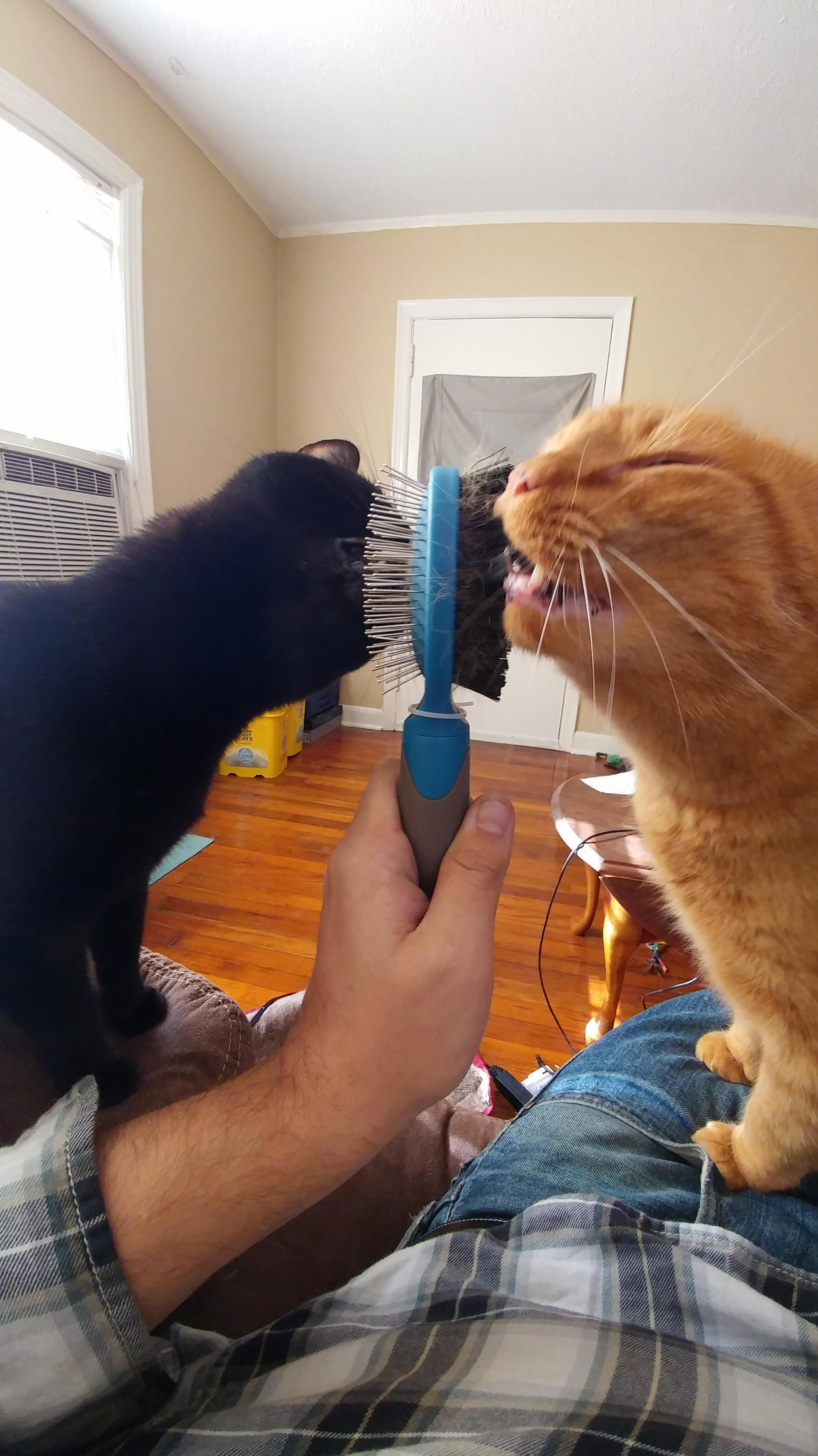 Apparently this is the correct way to use a brush