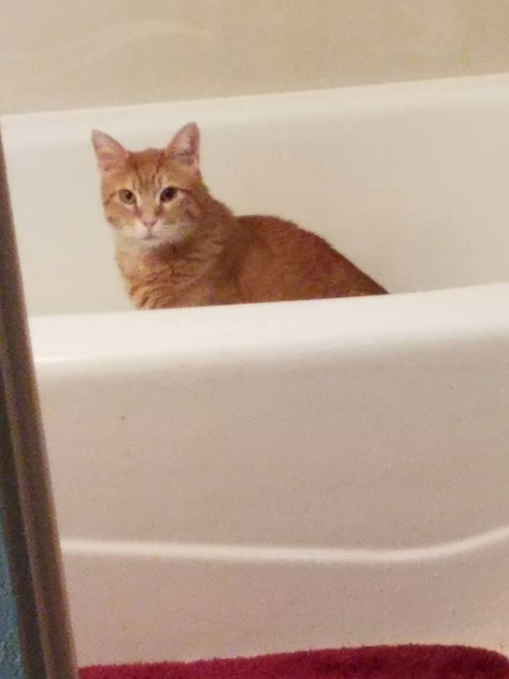 Cat in the tub – why does he do this