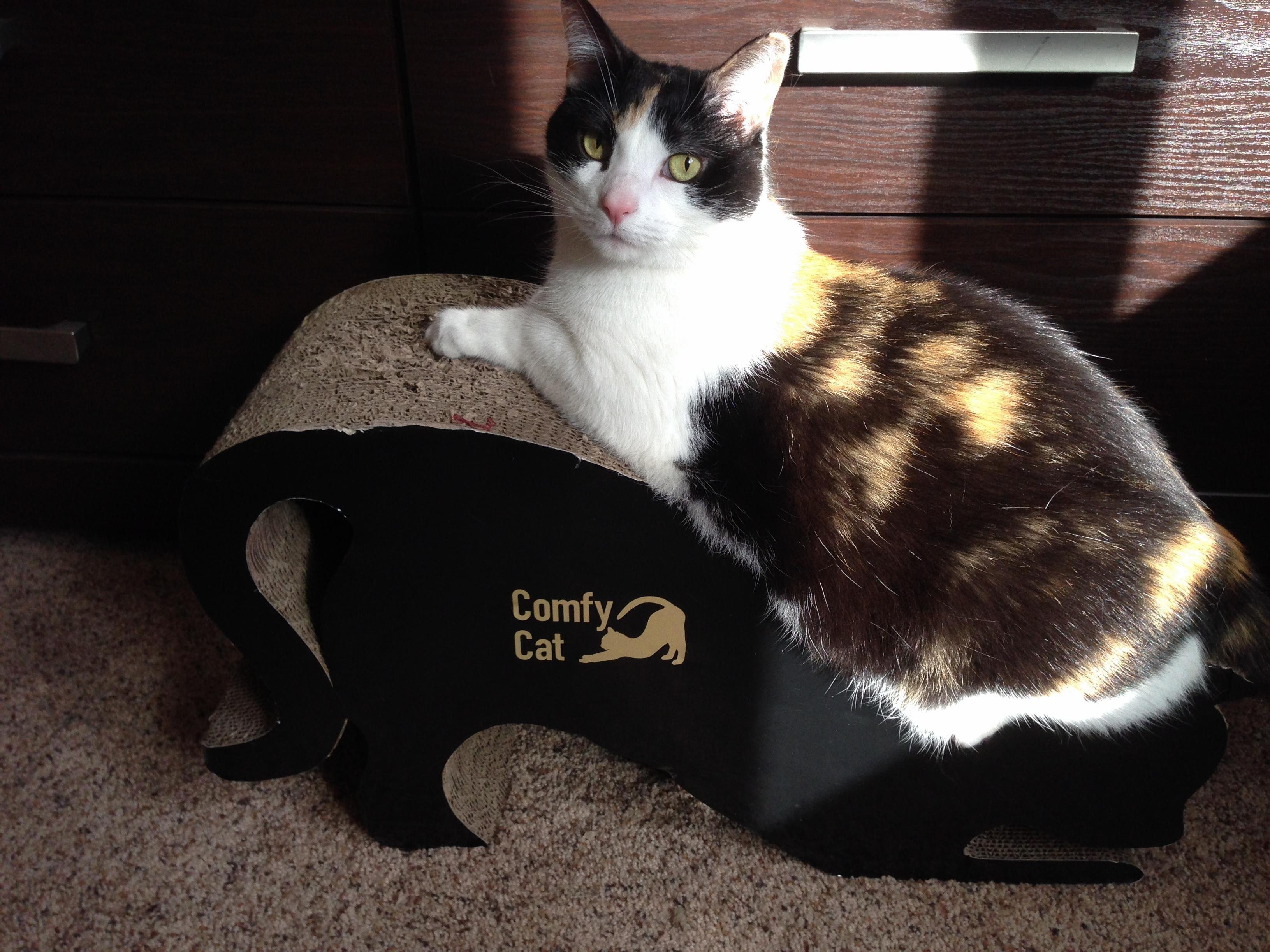 Comfy cat .