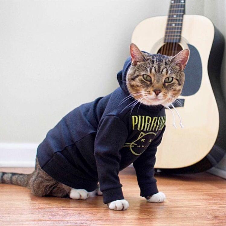 Frank wearing his purrvana hoodie