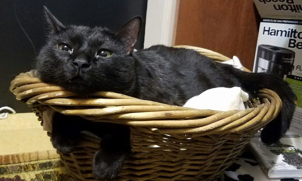 He loves his basket