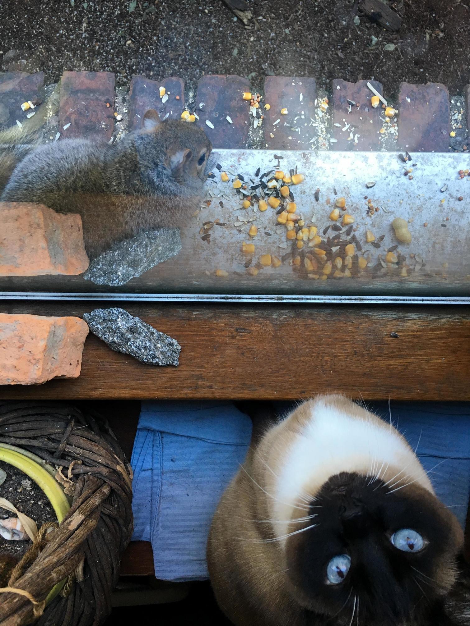 Jasmine would you pleeeeeeease let me play with mr. squirrel