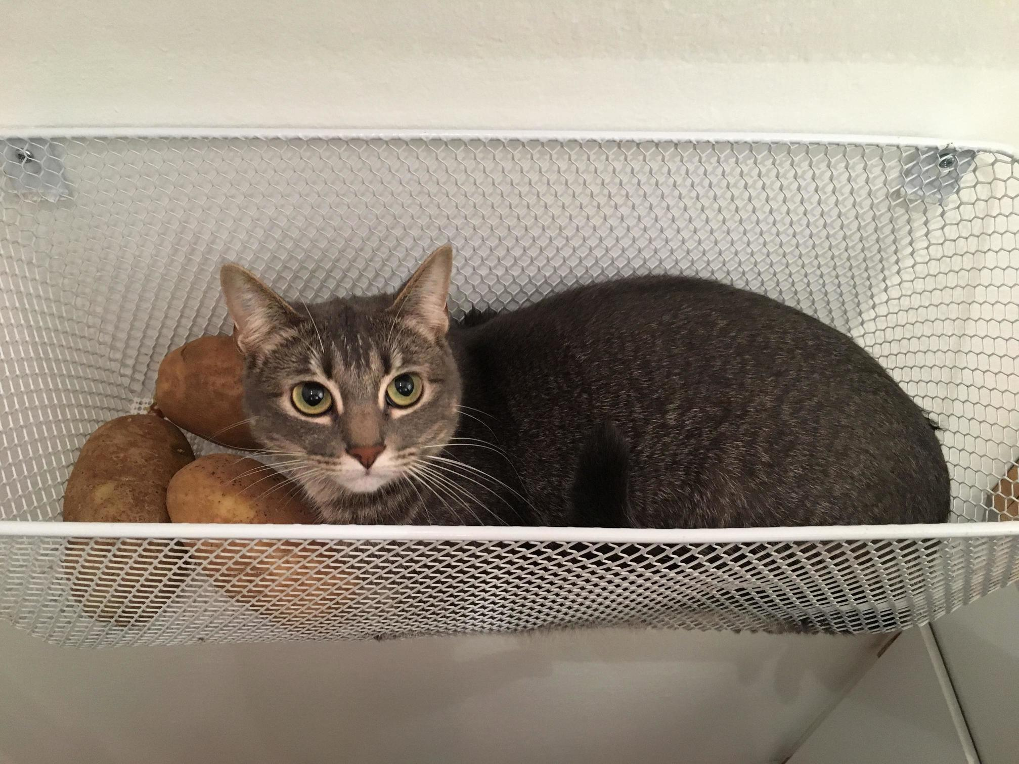 My friend caught her cat snuggling potatoes