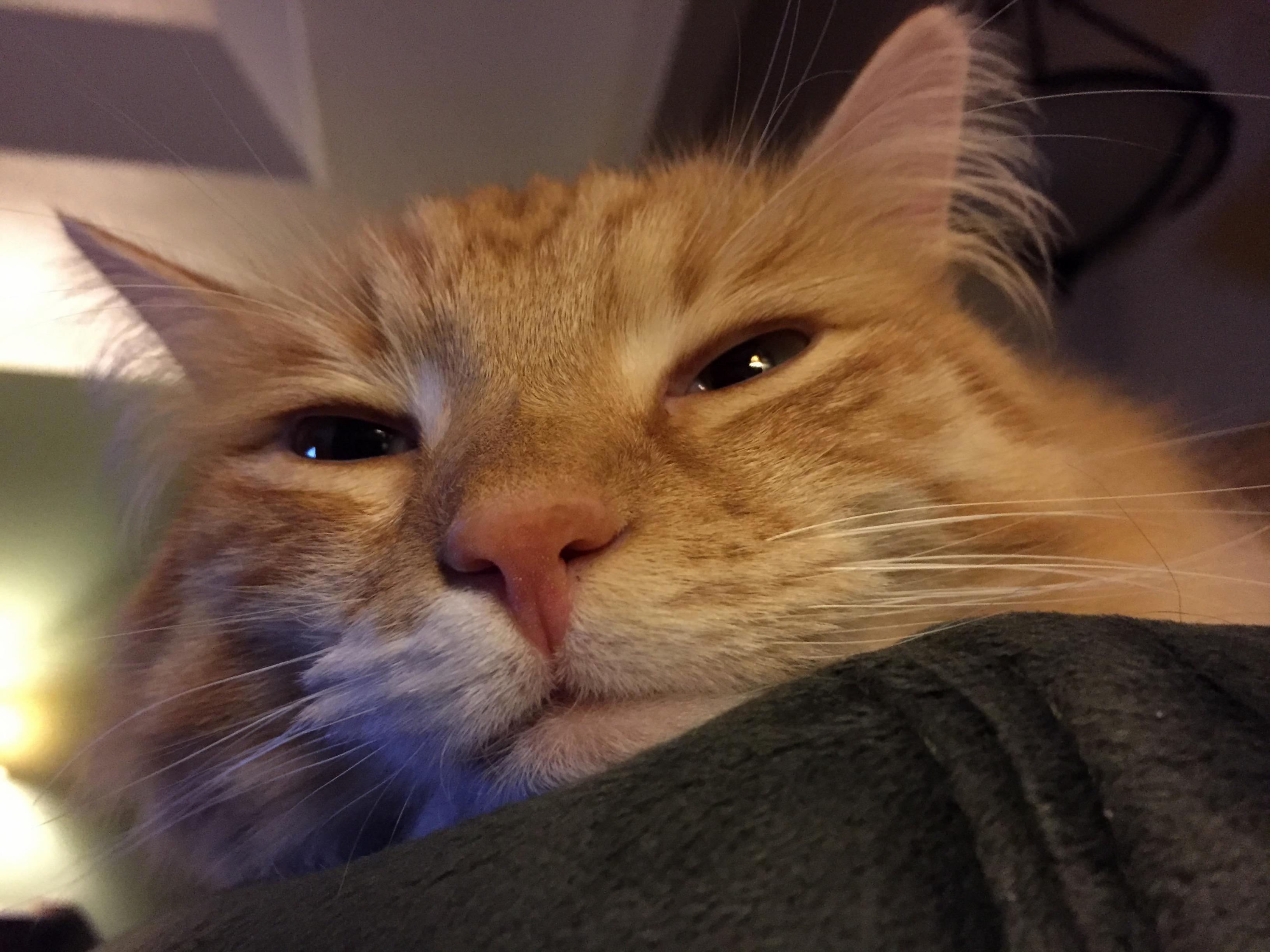 My valentine kitteh