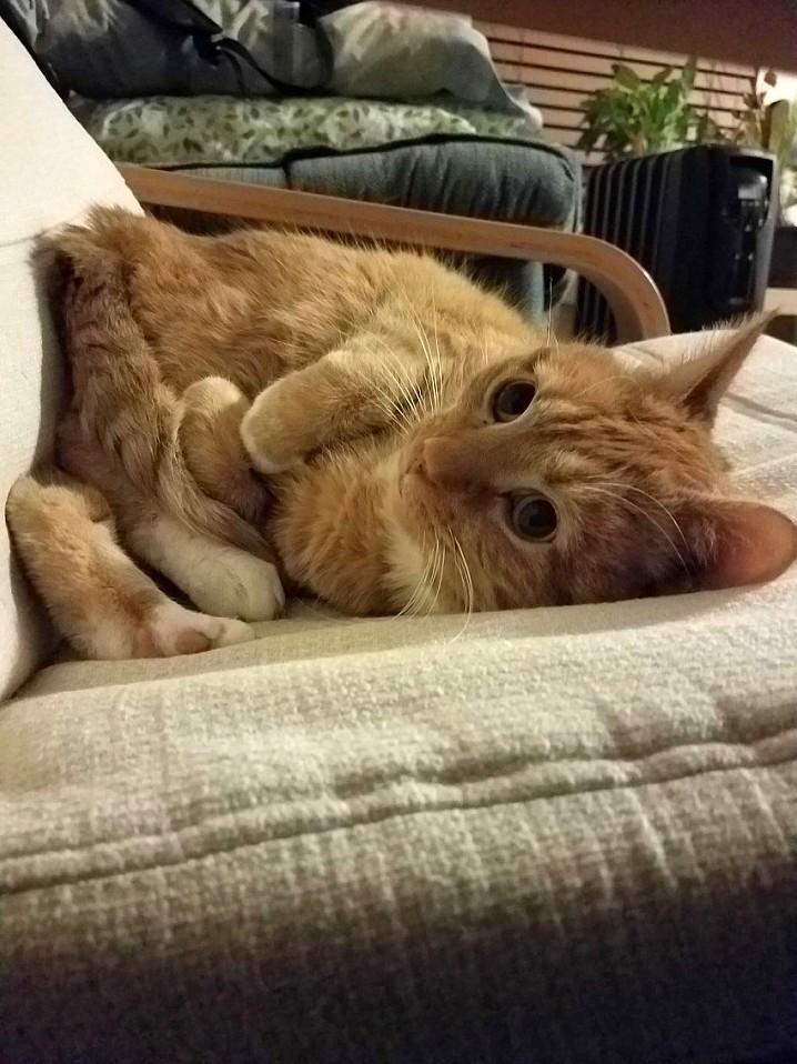 Pretzel cat