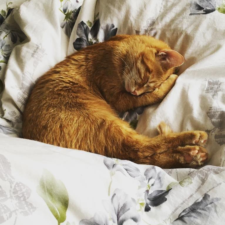 Simon is so adorable when he naps
