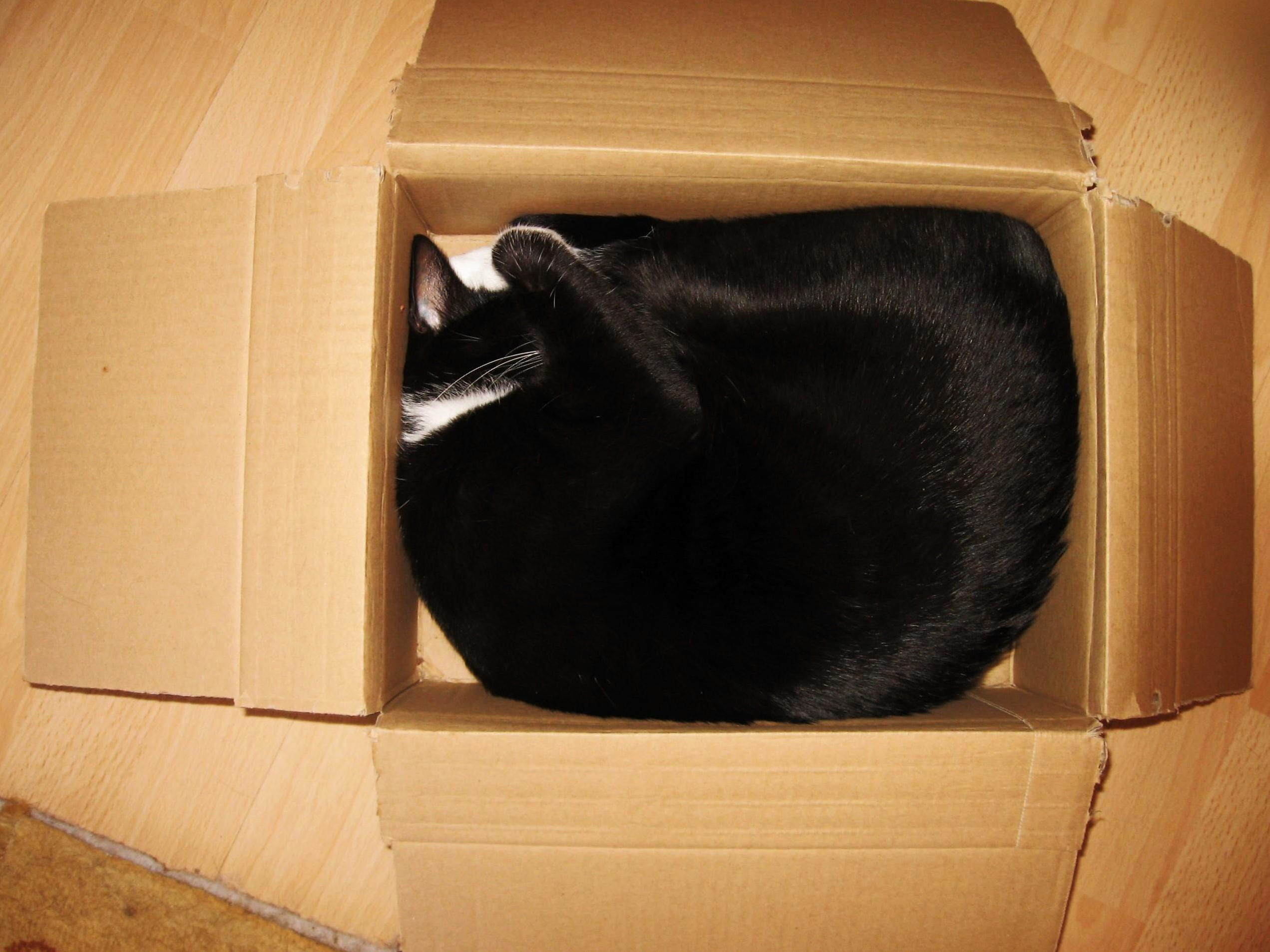 Sometimes i think i only order online for my cat to have something to sleep in