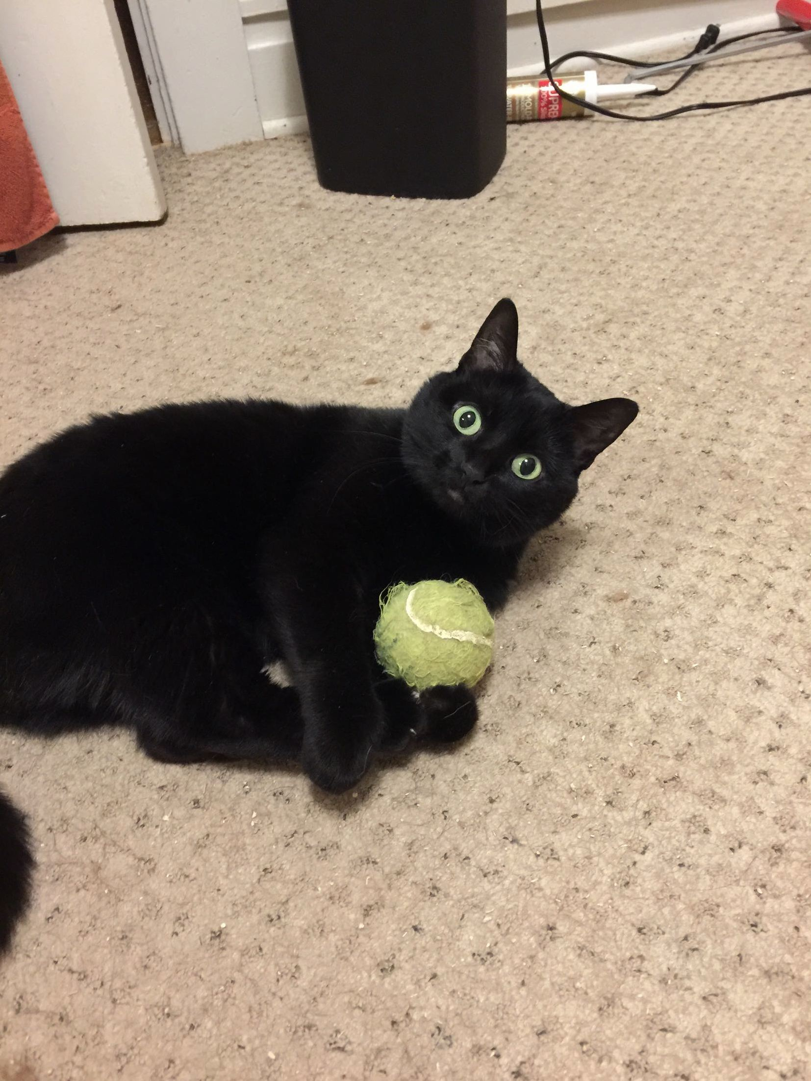 This is her favorite toy
