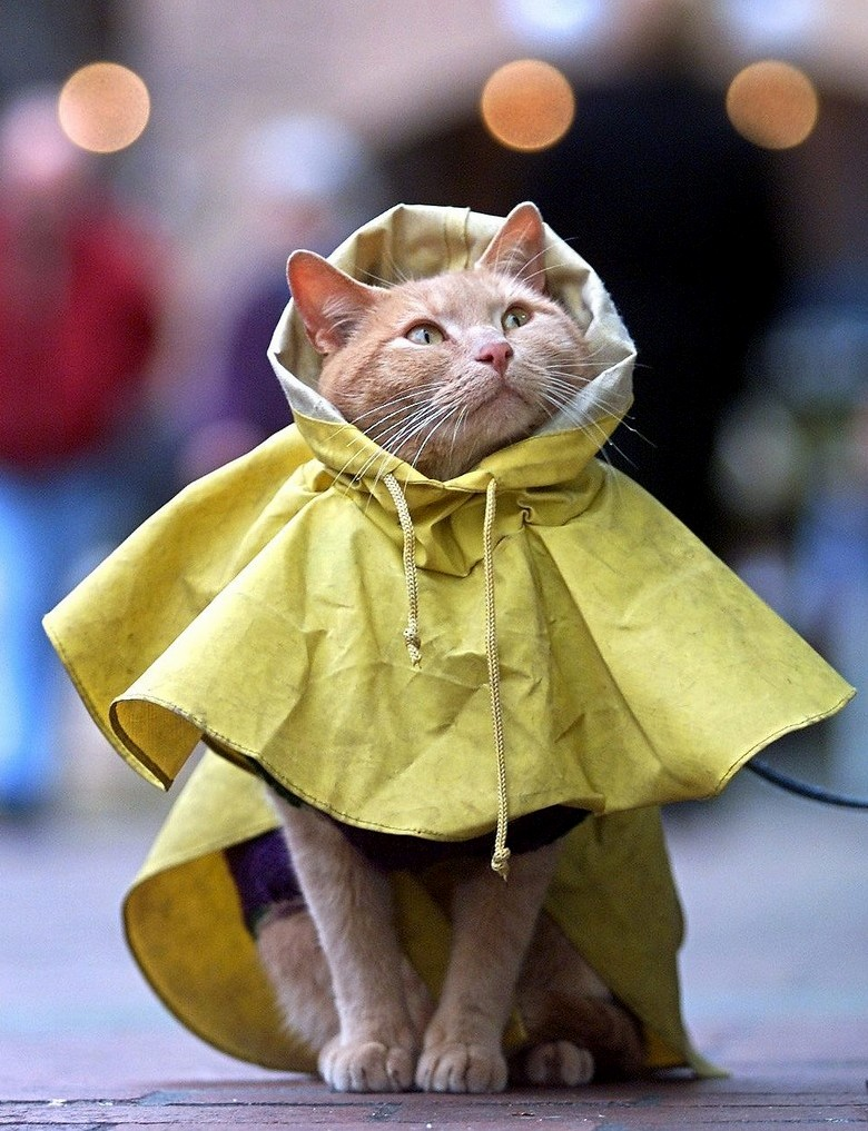 Waiting for rain to purr