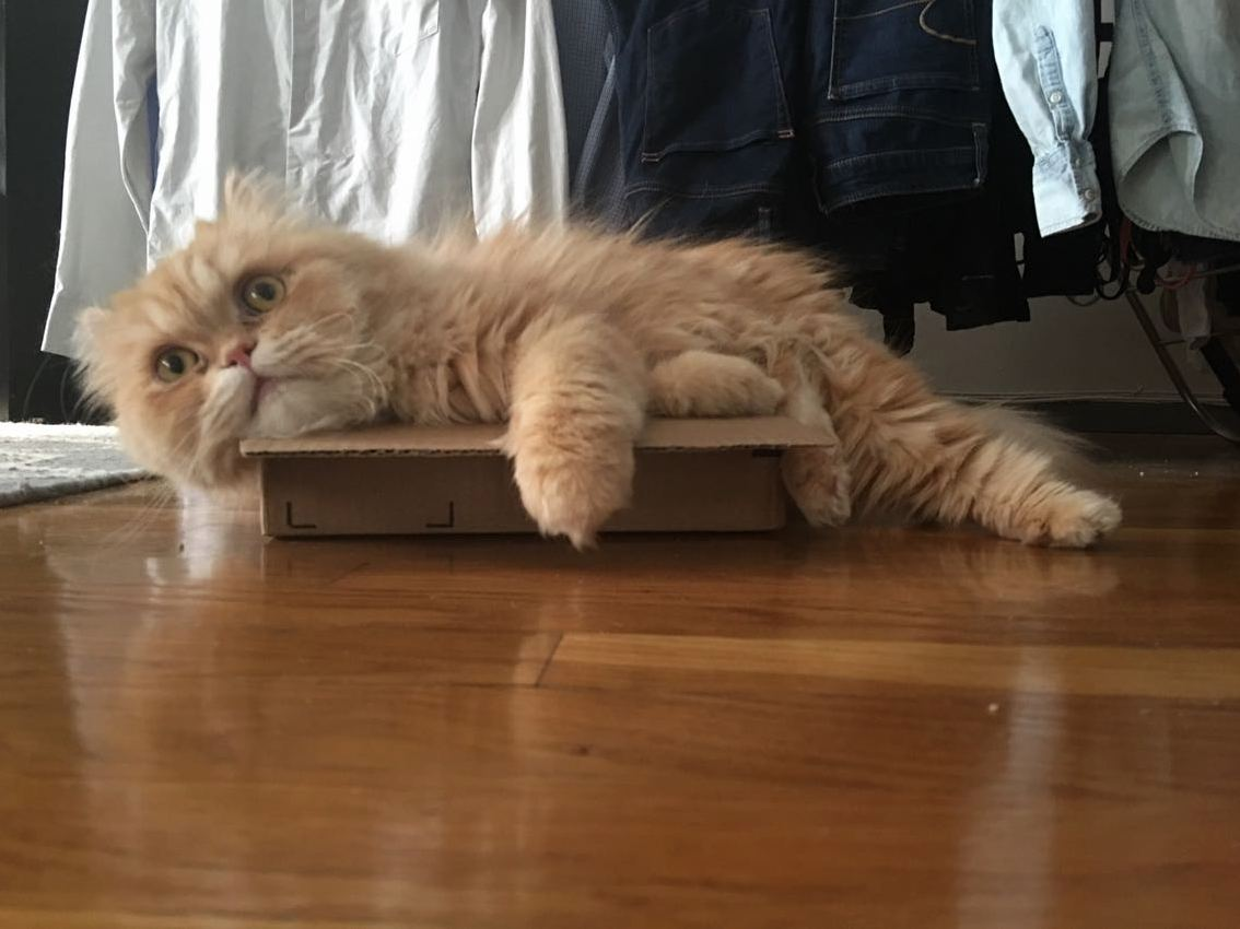 What do you mean i dont fit in this box