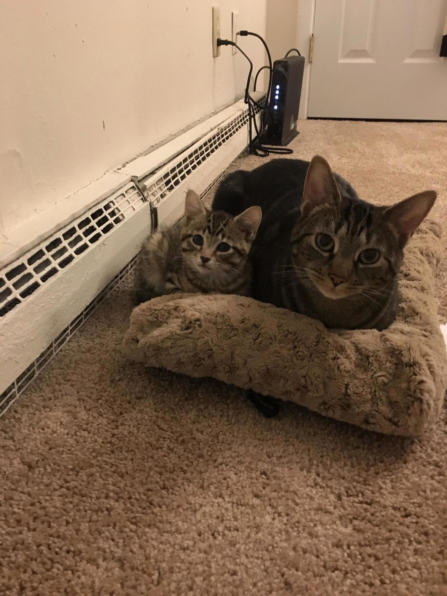 Big and small tiger loaves.