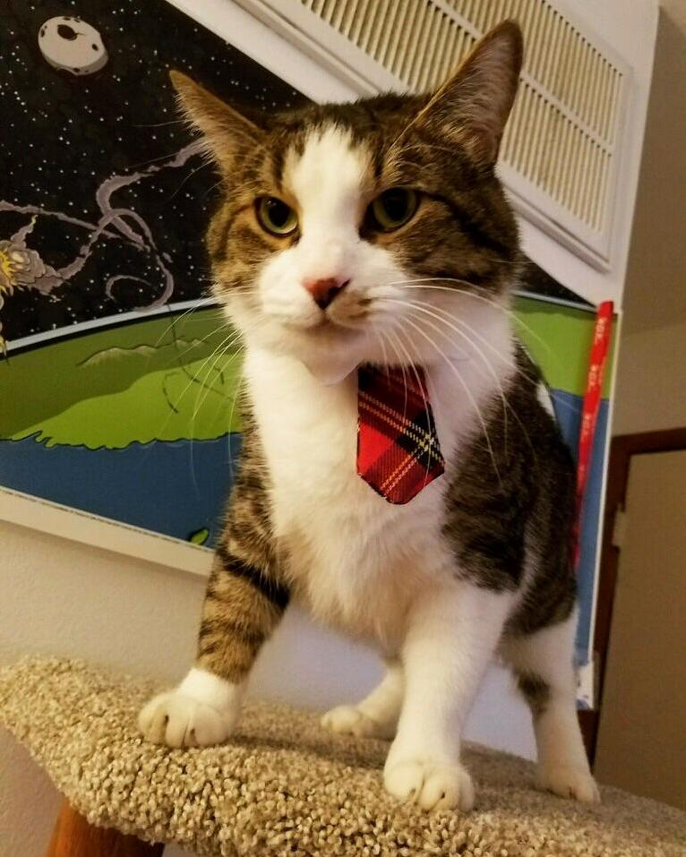 Captain bebop ready for some serious cat business