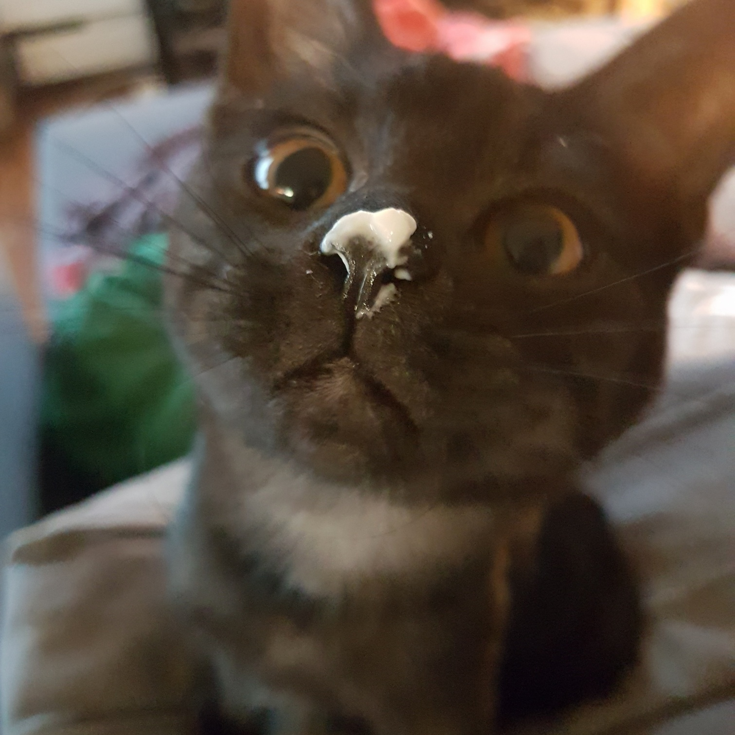 Cat got into my stash.