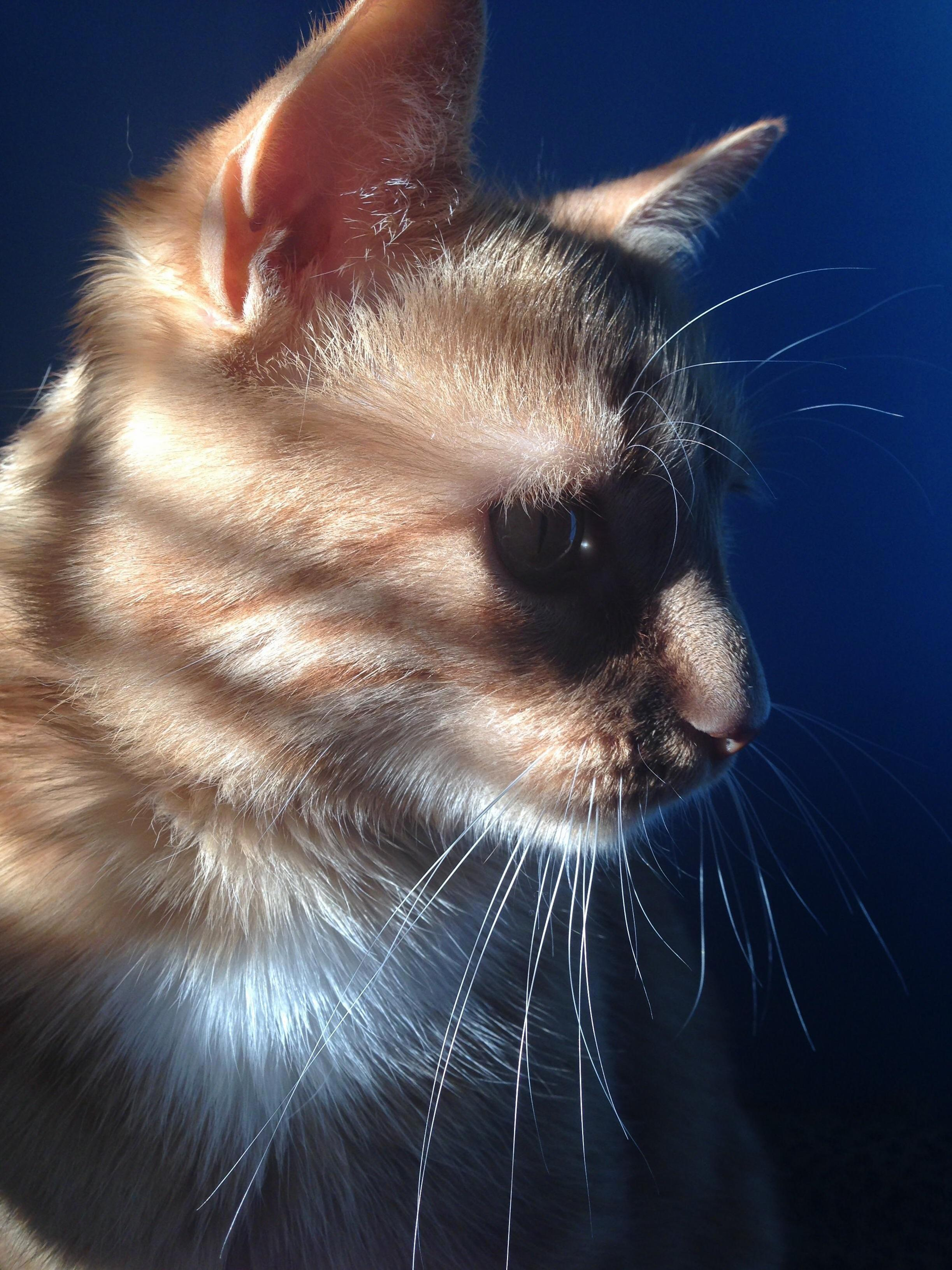 Cheddar modeling in the sunlight