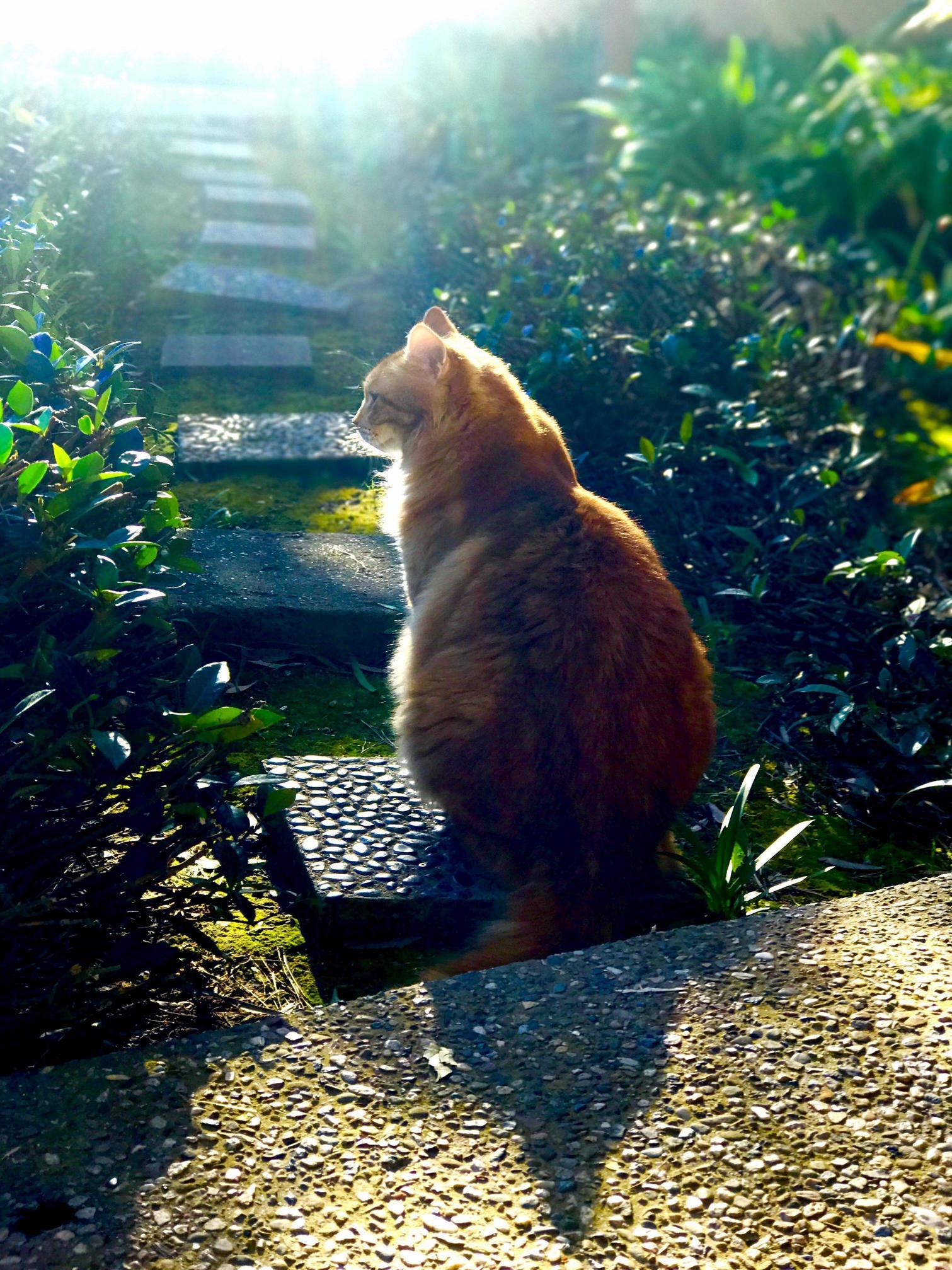 Goku in the garden