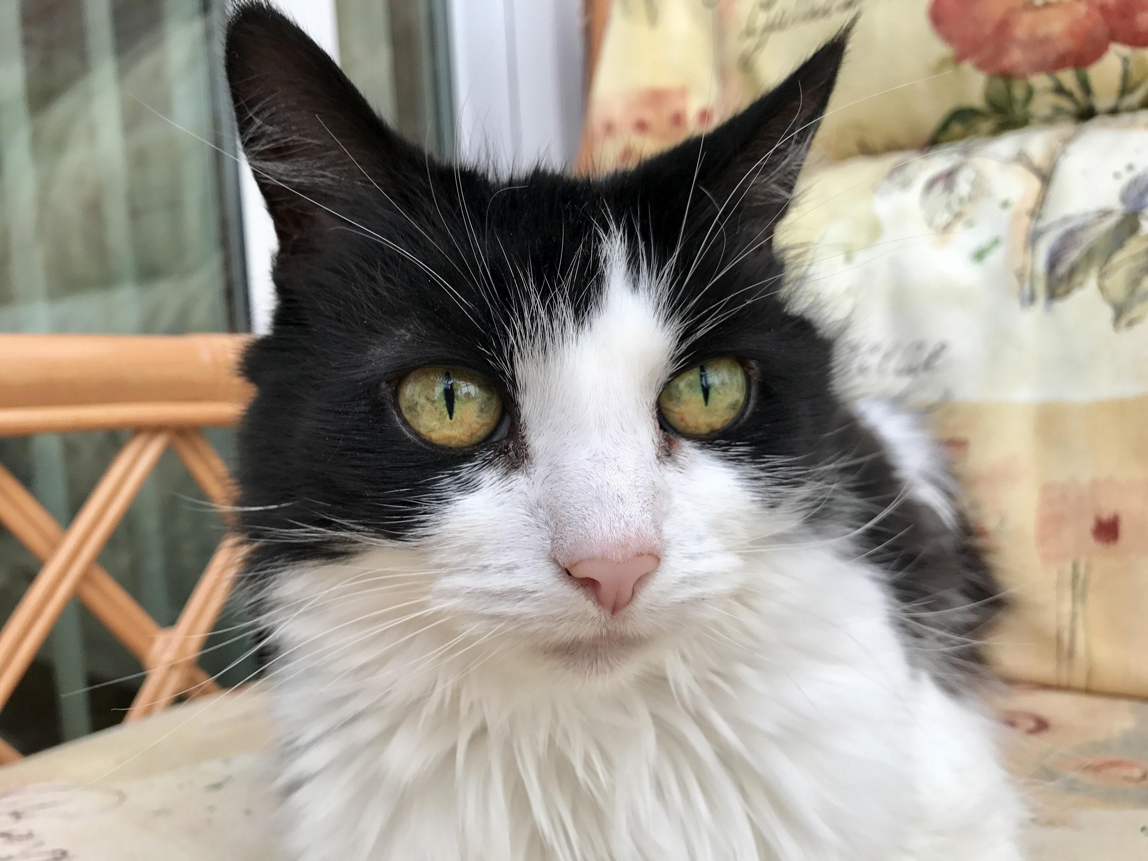 Grandmas cat  missy