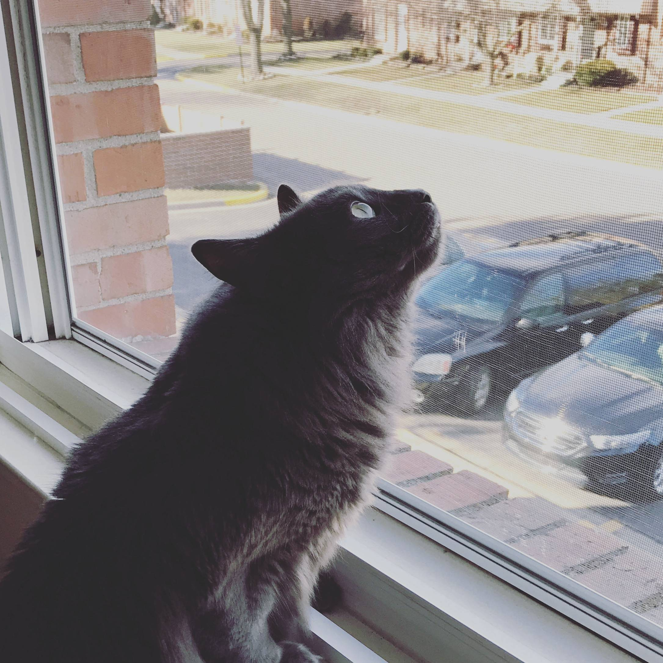 Grayson enjoying some birdwatching during the unseasonably warm weather