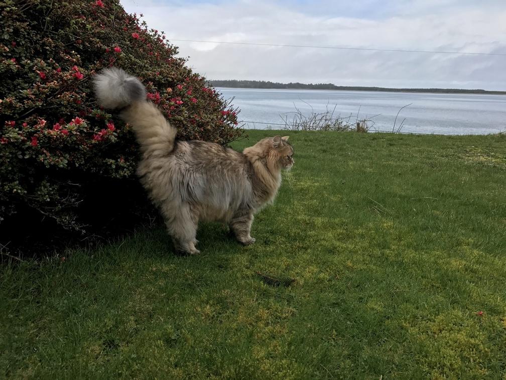 Helios enjoying the oregon coast in early spring