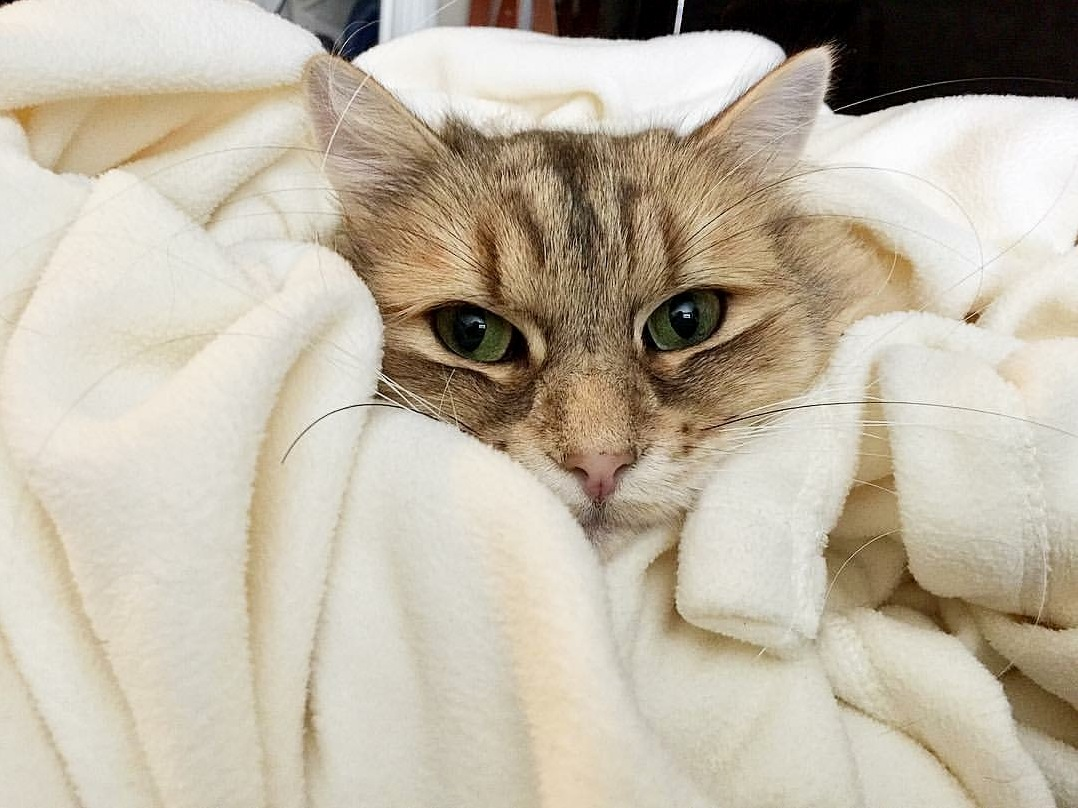 Helios snuggles in his favorite blanket