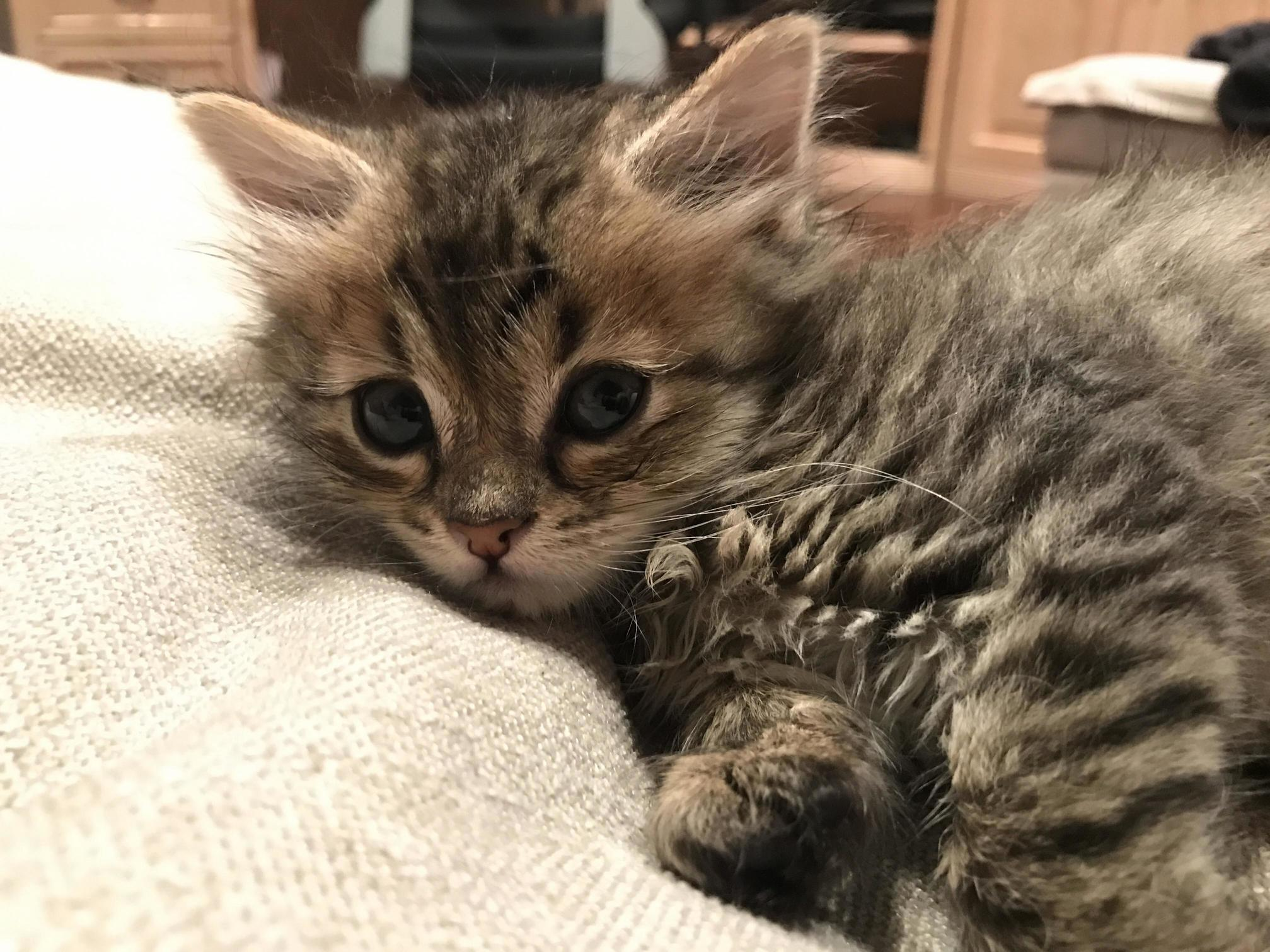 Hello everyone my family just got this cat and were trying to find a good name for her what name would you guys suggest