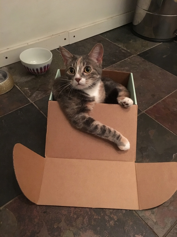 I dont always fits but when i do i sits.