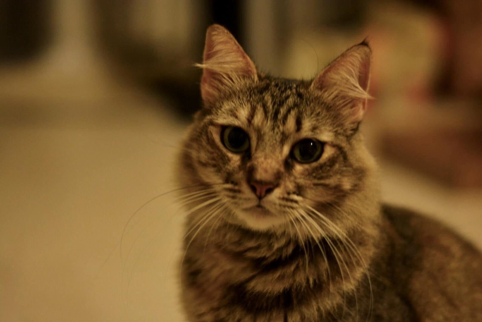 I dont like to photograph anyone except my cats. this is mish.