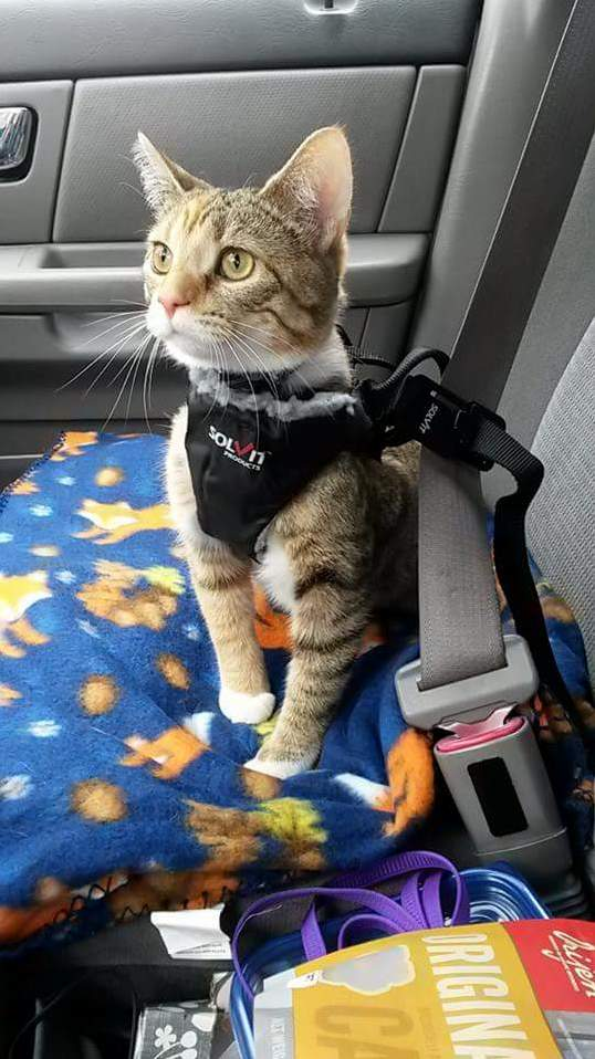 I taught my cynder to walk on a leash and ride in my car with a seatbelt harness. this is one of my favorite pictures of her adventuring.