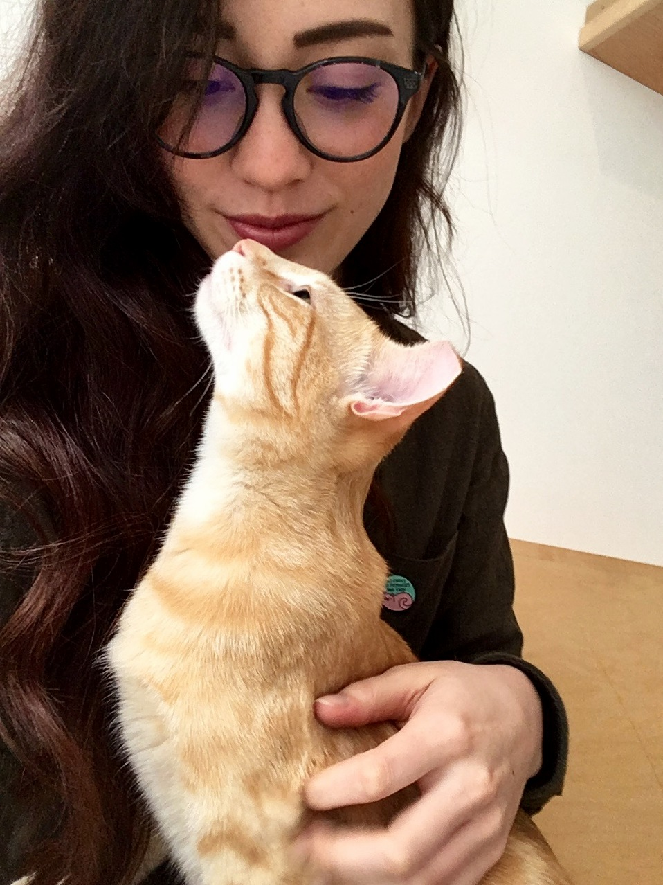 In love with ron at kittea cat cafe