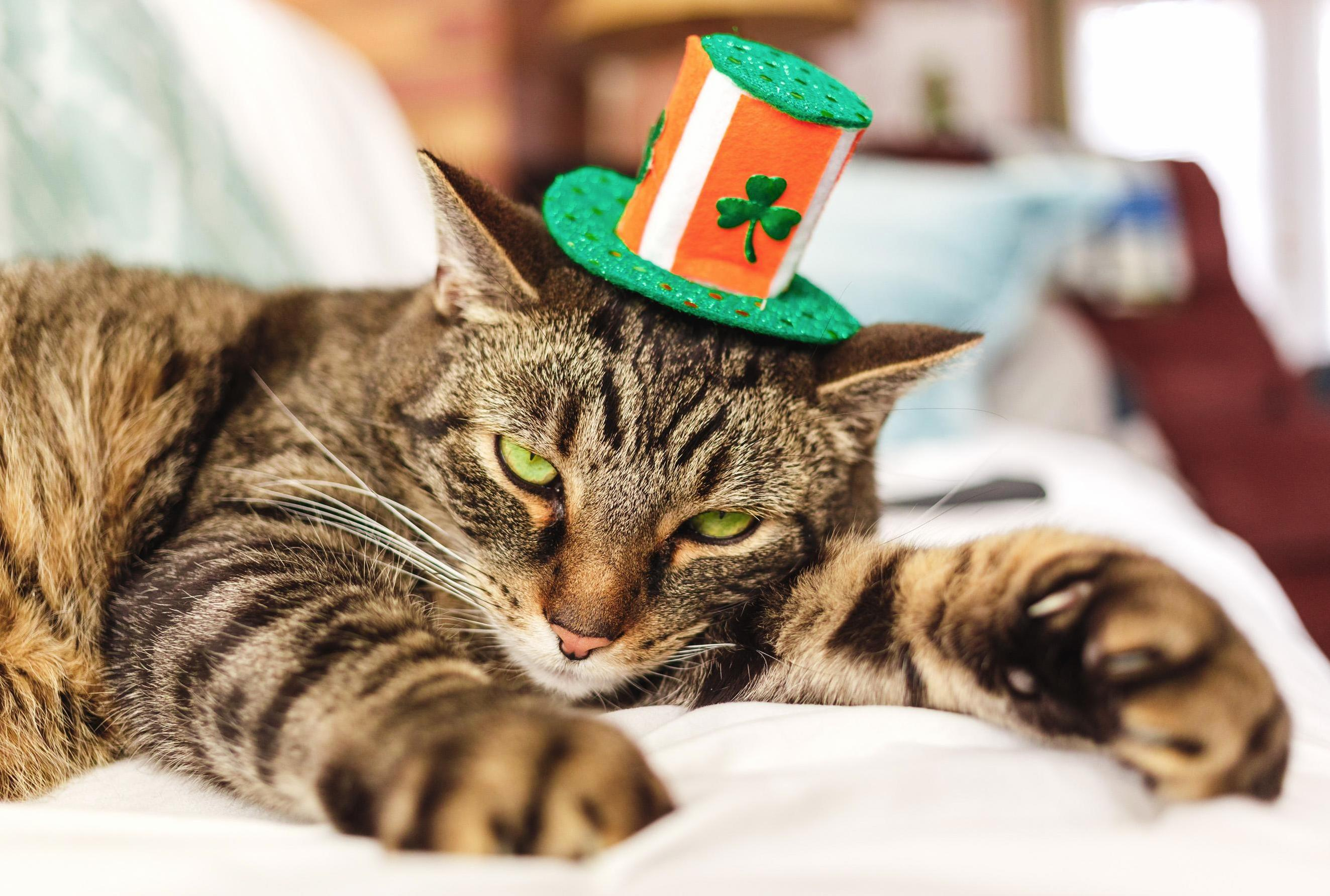 Jack is celebrating his irish heritage.
