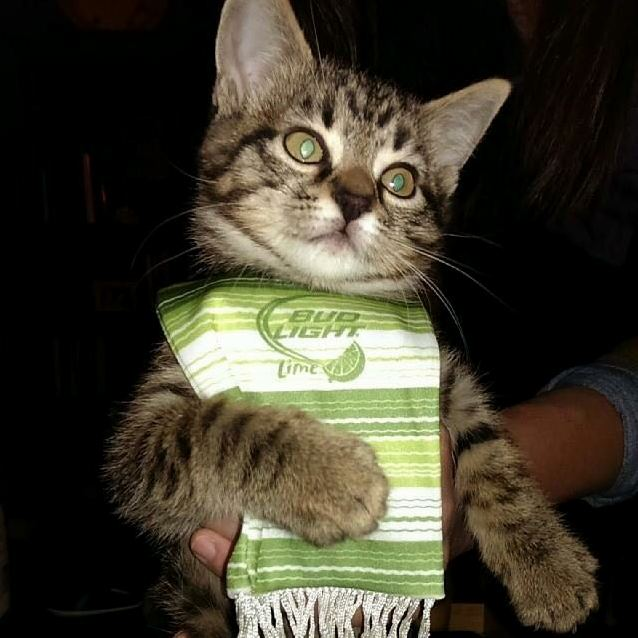 Kitten poncho