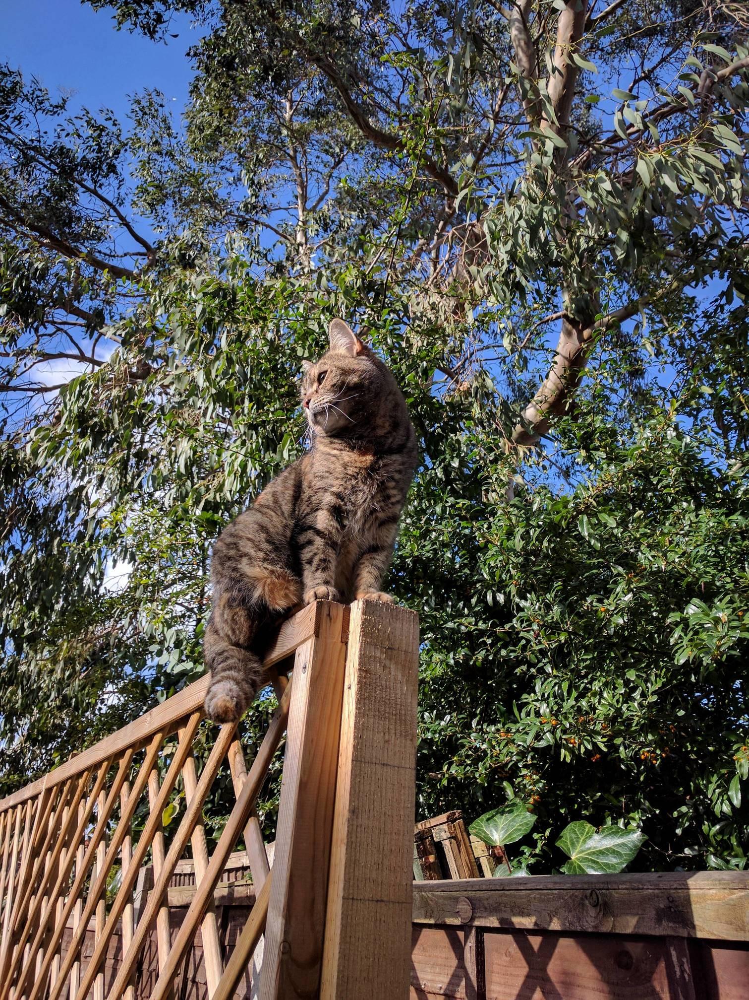 Leela climbs the trellis