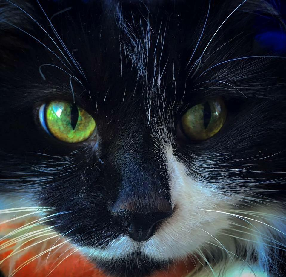 Lizzy the green eyed beauty.