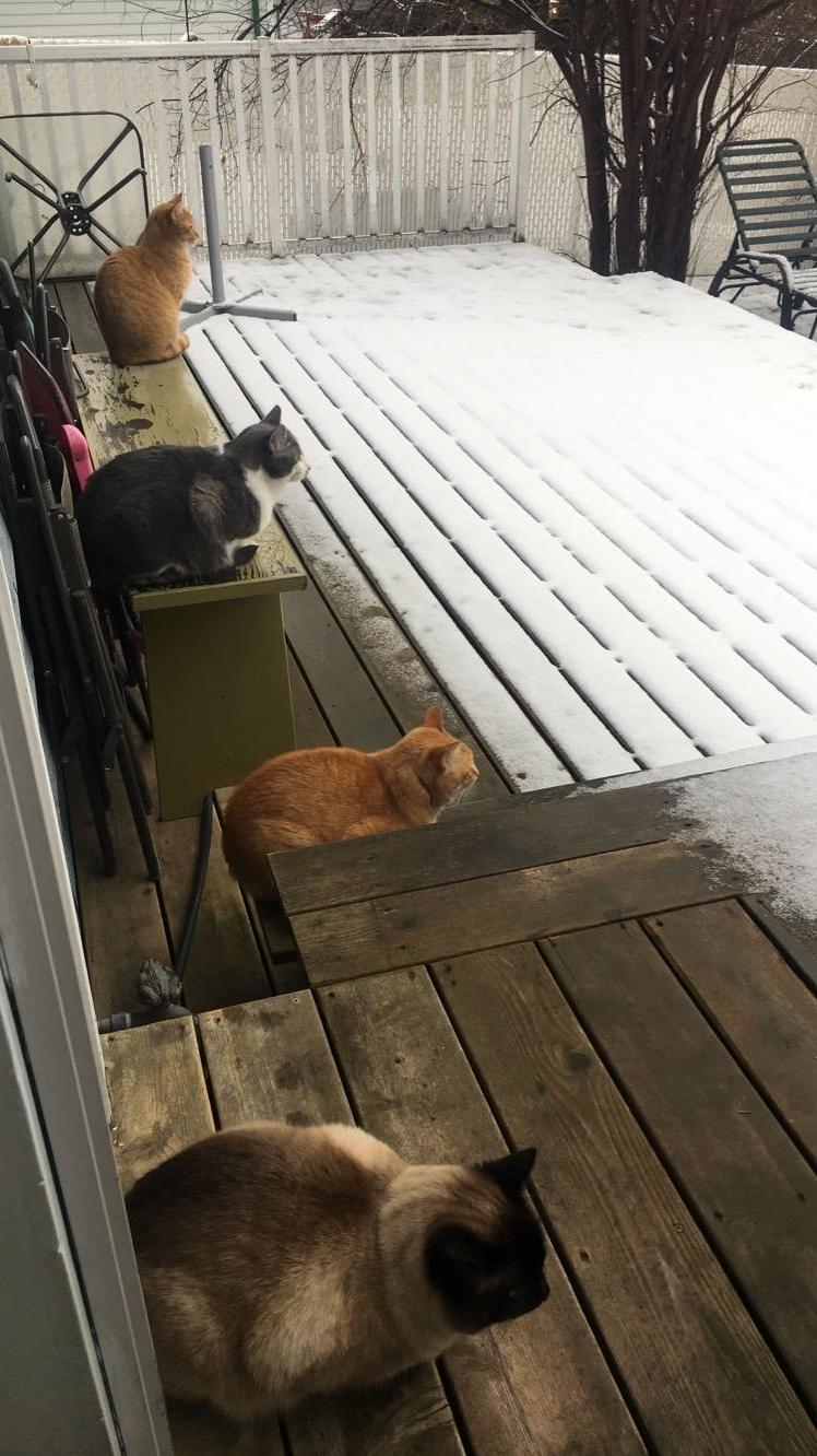Loaves vs. wall of snow a standoff