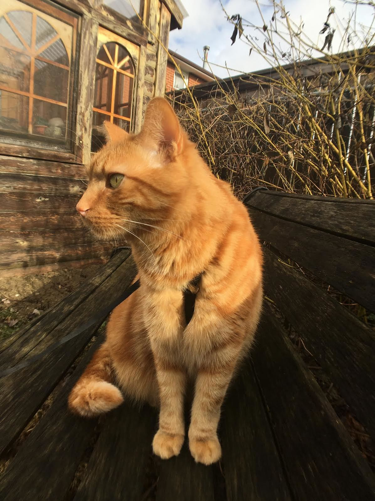 Look how handsome my cat oliver is when he sits in the sunshine x posted from rgingerkitty